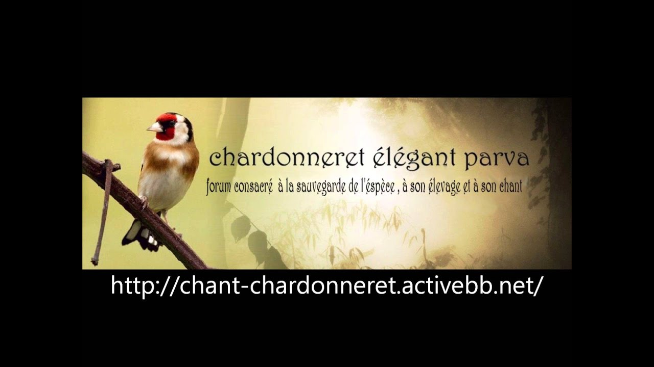 PARVA TÉLÉCHARGER MP3 CHARDONNERET CHANT
