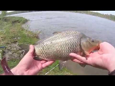 Рыбалка на Карася и открытие по Карпу на озере. Отличный клев и отдых.