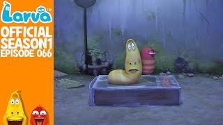 official super glue - larva season 1 episode 66