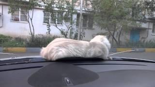 самый упрямый кот в мире, упрямое животное )))