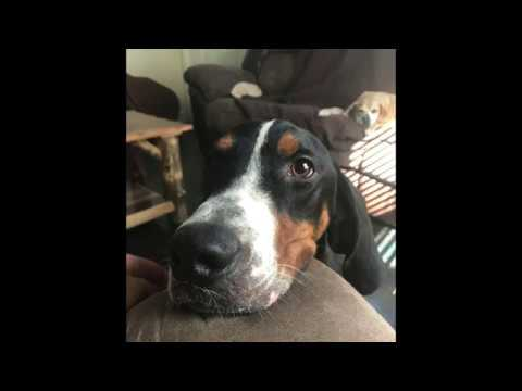 Virginia Dog Rescue - ADOPTIONS - Rescue Me!