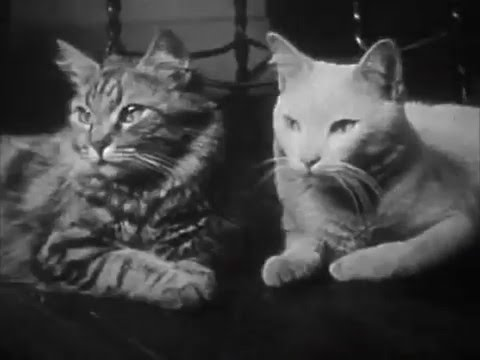 The Private Life Of A Cat (1944) Purrfect Version