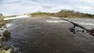 Ловля весенней плотвы на реке