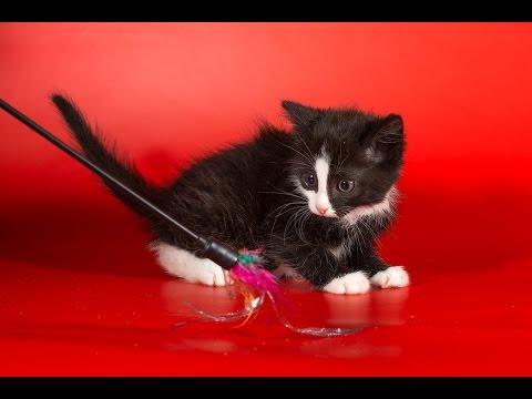 Черно-белый котенок из Лебяжье 24.05.2015