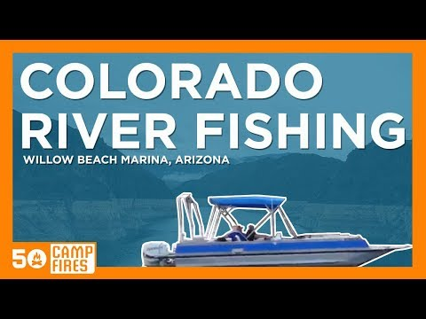 Fishing The Colorado River : Willow Beach Marina