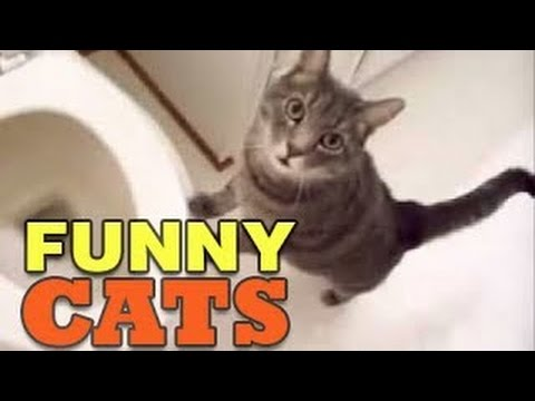 Funny Cats Vines - Funny Videos Compilation 2014 - HD ✔