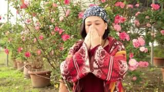 Download lagu 肯園植物學堂|探索 [玫瑰] 的療癒世界