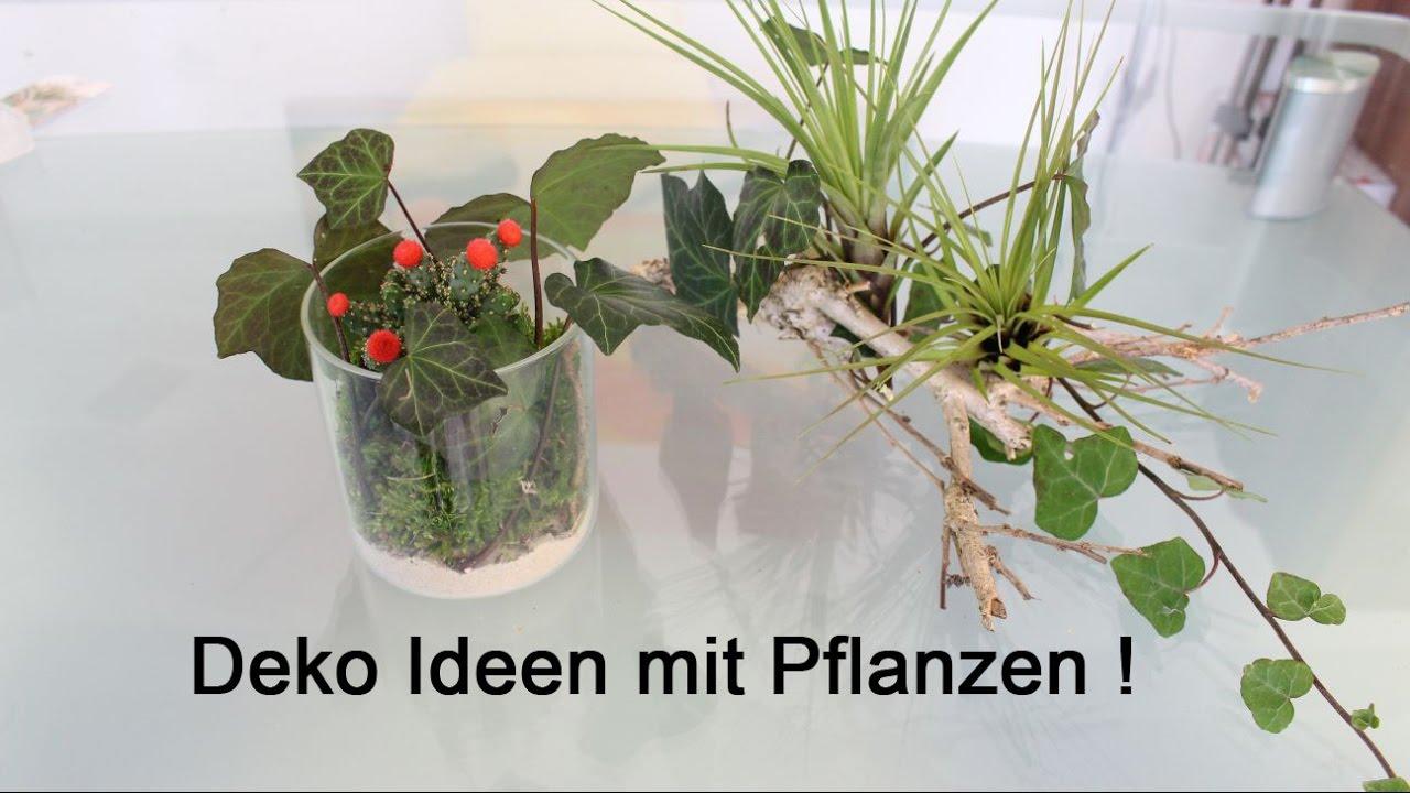 Deko-Ideen mit Pflanzen - Decoration ideas with plants
