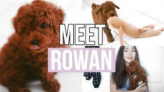 MEET MY NEW PUPPY! | Jenna Rosabelle