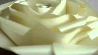 Видео мастер класс. Большие бумажные розы от Светланы Копцевой(Мастер класс гигантские цветы из бумаги от Светланы Копцевой. Студия бумажного декора. -В мастер классе..., 2015-06-29T10:49:17.000Z)