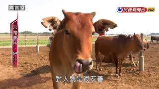 2017.10.28【民視異言堂】台灣黃牛‧好牛!