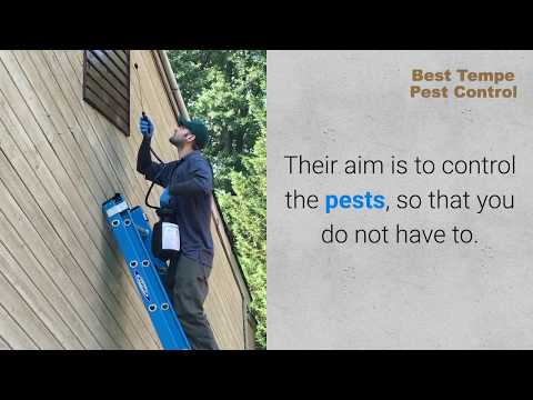 Pest Control Tempe AZ  | Termites, Ants, & Rodents
