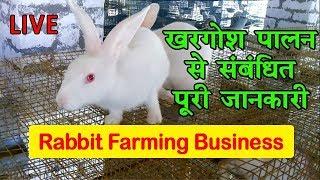 Rabbit Farming A Profitable Business खरग श प लन व यवस य श र कर अच छ कम ई कर