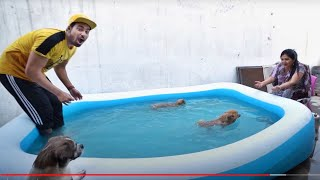 Worlds Smallest Dog Swimming Tournament - *Finale*