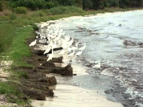 Rubondo Island shore birds