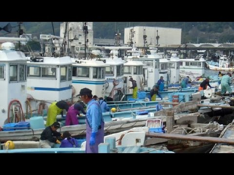 Japanese Fish Market