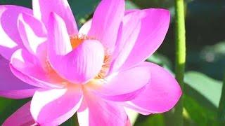 Красота Мира Природы (Цветы)
