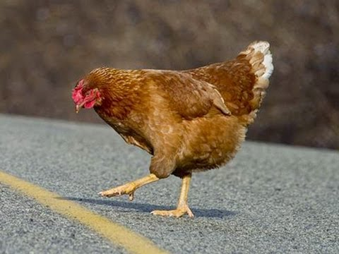 Anti joke chicken why did the chicken cross the road - photo#25