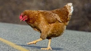 Why Did The Chicken Cross The Road? thumbnail