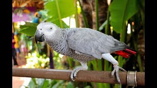 Talking Parrot  -  A Funny and Cutest Parrots Talking Compilation