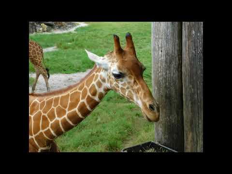 Jacksonville Zoo walkabout