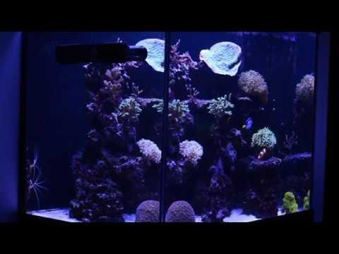 Juwel Lido 200 Reef Tank