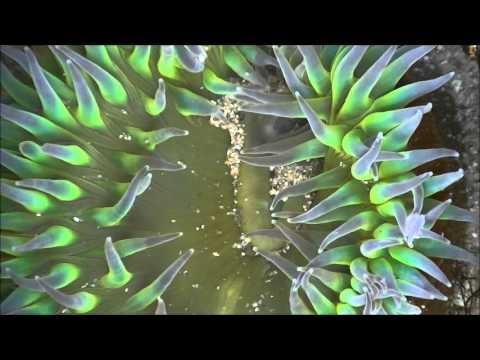 Tide Pool Creatures California filmed in HD. Существа зоны прибоя Калифорния