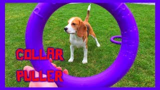 "Dog Toy Critic ""Louie The Beagle"" Episode #6 : COLLAR PULLER"