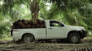 Isuzu D Max Single Cab Pickup 3.0