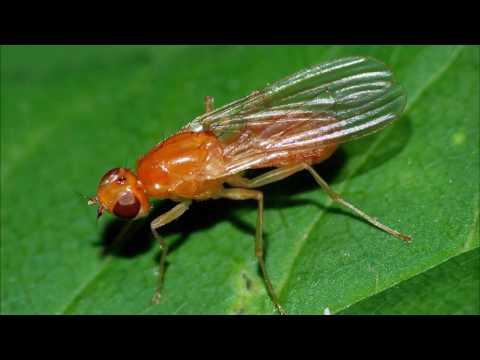 Морковная муха борьба за урожай! Как избавиться от мухи раз и навсегда?
