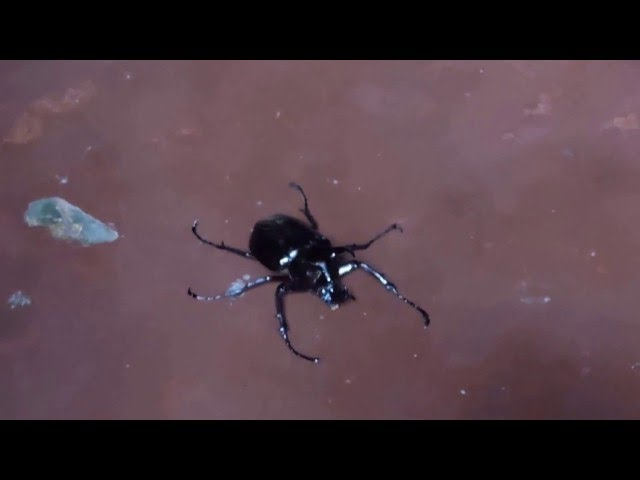 BUGS, What kind of BUG is this? I call it Amazing bug. Coolest ever..Scary Bugs