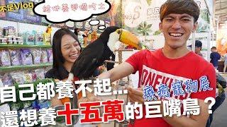 【 不足Vlog】狗狗韓文怎麼說?自己都養不起還想把十五萬巨嘴鳥帶回家之台中寵物展