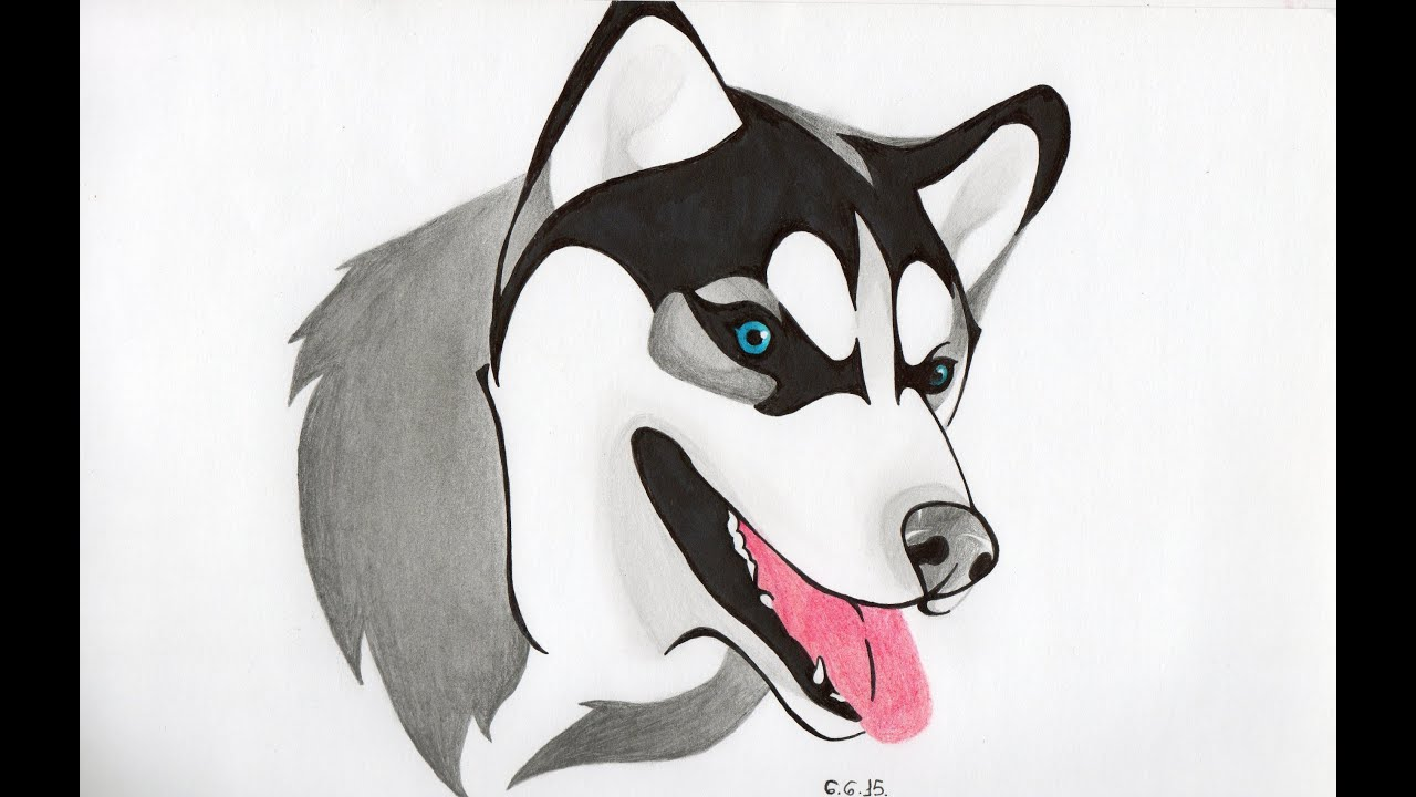 Dibujando a Husky  YouTube