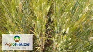Frudur-0, filiera del grano duro a residuo zero