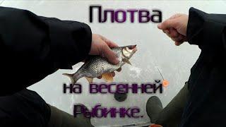 Ловля плотвы по последнему льду Рыбалка с безмотылкой на Рыбинском водохранилище Плотва на мотыля
