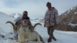 Video Tian Shan Marcopolo hunting (Chasse). Looking for the great one. By Seladang download MP3, 3GP, MP4, WEBM, AVI, FLV Juni 2018