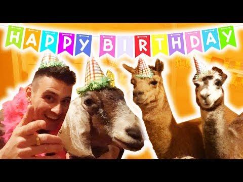 MINI HORSE SURPRISE BIRTHDAY PARTY