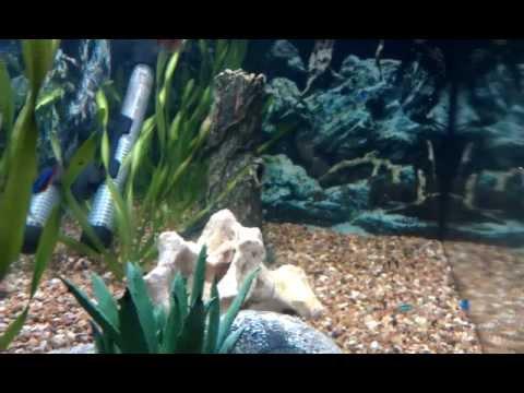 Fish Tank 001.