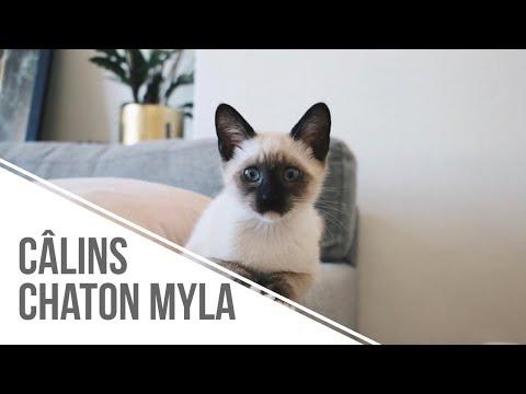 LES CÂLINS DE MON CHATON MYLA (j'ai Le Meilleur Chat Au Monde !)