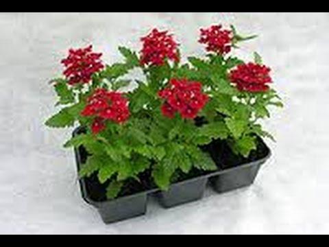 Какие цветы сеять в марте?