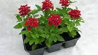 Какие цветы сеять в марте?(Какие цветочные культуры следует посеять в марте? Подумаем об этом заранее. Март - оптимальное время для..., 2016-02-18T16:58:00.000Z)