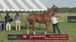 Grand Show Anglo 2016 : Lot 68 - GOLDEN BROWN