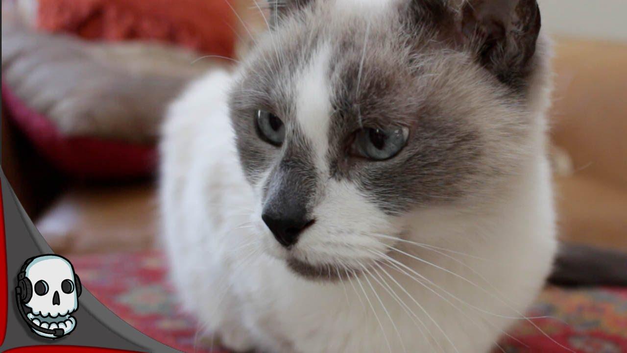Valentines Day Kitten Short Film Youtube