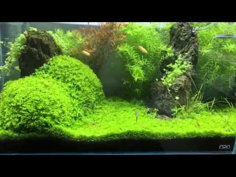 ada-cube-garden-60p