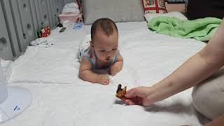 아기 기는 연습은 호두과자가 직빵!