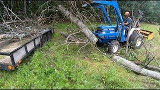 pulling-down-dead-trees