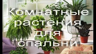 Какие комнатные растения подойдут для спальни(, 2015-02-12T11:57:22.000Z)
