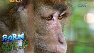 Born to Be Wild: Rescuing wild monkeys in Santa Cruz, Marinduque