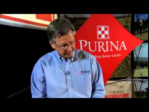 Purina Wind And Rain® STORM Cattle Minerals