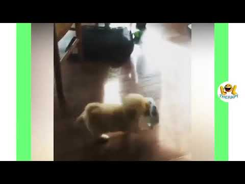 Best  funny  cute dogs and cats compilations 2020